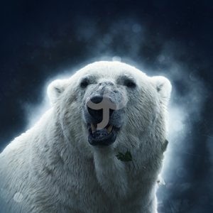 thes2680-polar bear portrait on a blue abstract background-25
